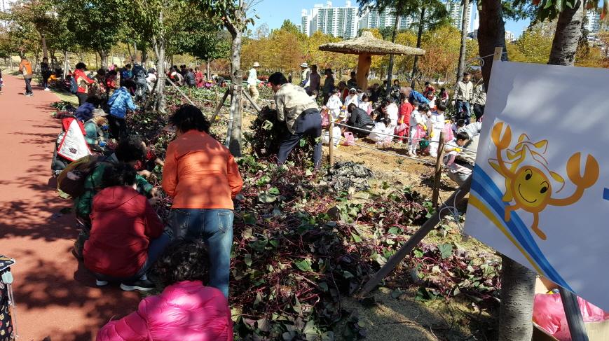 부산시민공원 고구마 수확체험행사 이미지2번째