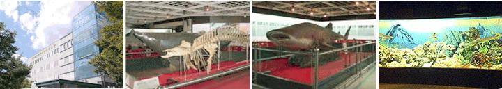 부산해양자연사박물관사진